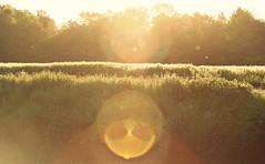 (felix.h) Tags: canoneos400d canon eos 400d eoskissdigitalx digitalrebelxti tokina5013528 tokina50135mm28 frankfurt frankfurtmain frankfurtammain rödelheim landscape hessen hesse backlight backlighting summer lensflare