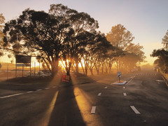 Suburban Sunrise (stephenk1977) Tags: australia queensland qld brisbane enoggera suburban sunrise train station rail trees road mist fog golden light iphone vsco v8