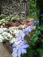 The Folly (amanda.parker377) Tags: clemetis oldmansbeard travellersjoy blue climbers perennials clemetisvarieties gardenflowers