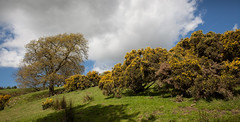1920p 72dpi-7062 (reach.richardgibbens) Tags: bowland lancashire england uk littledale fell moorland moor valley dale