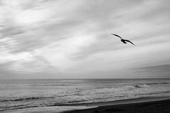 shades (tamasmatusik) Tags: malibu ocean seaside seagull bird waterbird losangeles waterfront shore nature beach malibubeach blackandwhite bw feketefehér monochrome sonynex sony nex3n milc 30mm sigmalens sigma clouds grey shades transitions