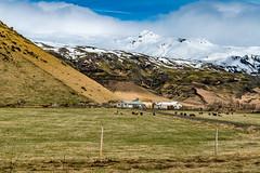 Eyjafjallajökull (ddny2k) Tags: iceland eyjafjallajökull a99ii sal2470z2 sheep landscape