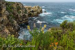 _DSC5418 (Sue Brazelton Photography) Tags: april2017 california places pointlobos spring