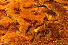 Bacterial mats (c.moritz62) Tags: bacteria yelllowstone nationalpark hotspring