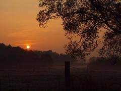 SUNRISE WITH MIST P4085037 (hans 1960) Tags: outdoor nature natur sun sunrise sonne sol soleil atardecer tree stille mist misty landschaft landscape germany himmel sky