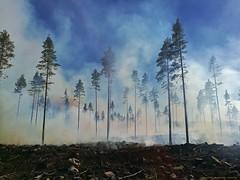 Skogsbrand, Fire in the forrest (MIKAEL82KARLSSON) Tags: skogsbrand grängesberg gränges dalarna sverige sweden bergslagen huawei honor8 mobilfoto mobilbild mikael82karlsson flickr