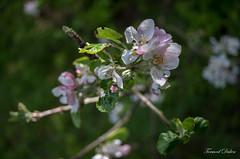 Printemps ! (1) (Tormod Dalen) Tags: smcpentax2835 fleurs boisdevincennes bokeh