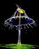 Droplet X (butchinsky) Tags: tropfenfotografie butchinsky bayern butschinsky bavaria bewegung droplet dropart dropingwater deutschland dreiventile wwwschmidhelmutde waterdropart wassertropfen wasser watersculptures wassermitsahneundlebensmittelfarbe waterdropphotography wasserskulpturen schmid skulpturen splitsecond schwarzerhintergrund helli helmutschmid highspeed catchtheclimpse climpse catching catchtheclimps copyrightbyschmidhelmut2016 tat tropfenauftropfen tropfenskulpturen tropfenfoto technischefotografie