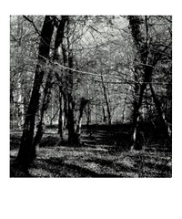 DIAP WOOD 004 (Dominiq db) Tags: diapo séries wood trees arbres forêt nature