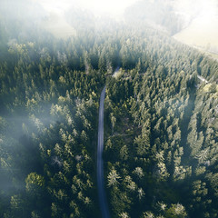 Fog. (Philipp Sarmiento) Tags: regensburg ratisbona bavaria philipp sarmiento inspire dji lifestyle canon sigma forest wald landscape sky drone