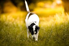 To sniff out (Ricardo Zaviasky) Tags: cachorródromo ibirapuera parque pets dogs fineart canon 5dmarkiv 70200mm art photography photographer