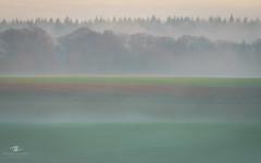LFT- Autumn scene Steinsel plateau (Alfonso Salgueiro | Photography) Tags: sonyalphailc sonyalpha steinsel winter a6500 fog forest sunrise sunshine
