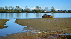 Abandoned Boat on Pitt River - Port Coquitlam (SonjaPetersonPh♡tography) Tags: portcoquitlam ptcoq poco britishcolumbia tramboulaypocotrail canada nikon nikond5200 traboulaypocotrail trail path cycling walking hiking scenic viewpoints mountains dykes pittriver metrovancouver views river shoreline riverbank pittmeadowsmarina boats mtbaker nature birds boating