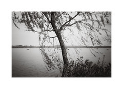 Wagingersee (cardijo) Tags: deutschland bayern bavaria germany landscape landschaft lake see tree baum blackandwhite bw sw schwarzweis monochrome analog film ilford fp4 agfaclack coolscan