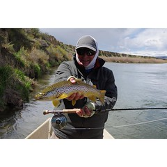 Chef Michael at it again!  @abelreels @simmsfishing #northplattelodge #flyfishing #browntrout #fishwyoming