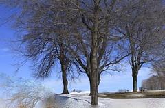 Avril à Québec. (odeber) Tags: obernard winter hiver neige snow trees