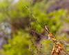The Baya Weaver (siddharthx) Tags: hyderabad telangana india in nature birdsofindia canon7dmkii hyderabadbirds hyderabadlakes habitat hcu bayaweaver birdsoftelangana birdonabranch bokeh goodlight pose birdthatposed ef100400mmf4556lisiiusm