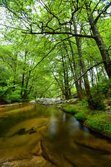 "Streams and lush forests of El oueldja ""massif of Collo"" (Metatla Photography) Tags: streams lushforests eloueldja massifofcollo غاباتوديانالولجة تلالالقل غابات وديانالولجة algeria algérie afriquedunord zonehumide eau exotic extérieur expositionlongue reflets tourisme trees travel oued insolite ombres paysage quality skikda spring découverte nikond4 green herbe landscape lights longexposure nikon nature metatlanoureddine metatlanoureddinephotography metatlaphotography extrême color voyage vacances beautiful"