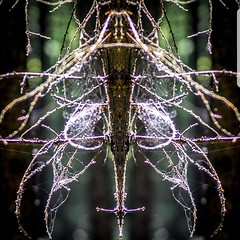 The Fly (jacquelineruddell) Tags: fly web tree creativephotography creativedesign unusual art wallart
