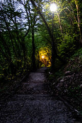 Path (@Dpalichorov) Tags: forest path walk fireflies bugs insect animals light blur bokeh nikond3200 nikon d3200 outdoor night dark tree lamp bulgaria българия way pathway trail footpath