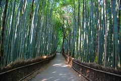 Arashiyama - Bamboo Forest (GlobeTrotter 2000) Tags: arashiyama japan kyoto tree asia bamboo forest holidays tourism travel vacation