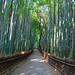 Arashiyama - Bamboo Forest