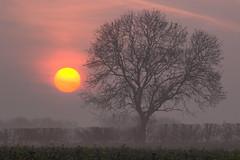 April Orb (Julian Barker) Tags: april orb sun sunrise dawn zoom tree stragglethorpe nottingham nottinghamshire field julian barker canon dslr