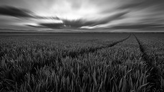 Dare you follow ? (jo.haeringer) Tags: longexposure sunset fields landscape clouds fuji xt2 barley corn path dramatic bw blackandwhite nb
