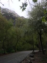 IMG_3812 (augiebenjamin) Tags: provorivertrail provocanyonparkway provo orem utah utahvalley mountains spring snow trees provoriver blooms provocanyon utahlake clouds sun sky
