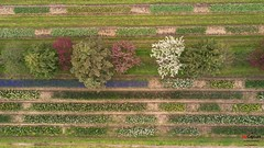 (procapturellc) Tags: nature landscape dronephotography aerial floweringtrees tulips flowers garden