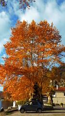 Καστορια P1280172 (omirou56) Tags: 169ratio sonydscwx500 kastoria greece tree clouds outdoor καστορια ελλαδα ευρωπη φυση φθινοπωρο συννεφα δεντρο