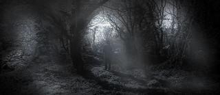 Foresta Incantata 1