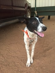 Happy Pupper (freelancing god) Tags: railscamp northernterritory mountbundystation railscamp21