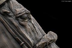 Barbaro Statue (Casey Laughter Media) Tags: barbaro horse statue churchilldowns churchill thoroughbred racehorse horses horseracing racing lightroom photoshop photography canon canon7dmii