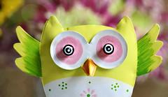 Hoot! Hoot! Look into my eyes! 😵 (Through Serena's Lens) Tags: mm macromondays eyes owl figurine metal colorful dof bokeh stilllife macro 7dwf macroorcloseup