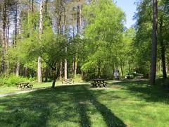 1238 Llyn Parc Mawr picnic platz (Andy - Busyyyyyyyyy) Tags: ccc conifer fff fir ggg grass green greenery iii ivy lll llynparcmawr picnicplatz ppp shadows sss table tree ttt
