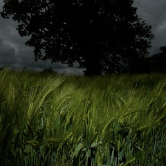 TERRA INCOGNITA (Grant Simon Rogers) Tags: grantsimonrogers ƒ leica leicaq leicasf40flash leicaflasher guildofstluke flânerie flasher flashing flâneur hampshire boarhunt ashleydownlane portsdownhill england englandshire englishpastoral pastoraldances soberton thewhitelion beerdays green blue colour technicolor thefirst10000 sooc straightoutofthecamera clouds overcast q photopsychotherapy artistphotographers vilémflusser philosophyofphotography individuation inbetweenshowers instagram facebook twitter themanwhoflashedattrees hichabitatfelicitas terraincognita