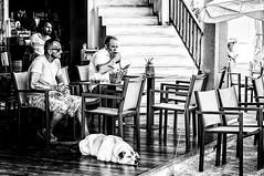Parikia, Paros (Kevin R Thornton) Tags: d90 taverna watchingtheworldgoby nikon travel street people parikia mediterranean greece dog paros egeo gr