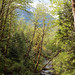 middle fork snoqualmie river (Sam Hay) Tags:
