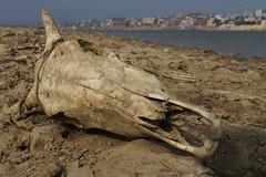 IMG_6307 (anthrax013) Tags: india varanasi corpse dead death bones skull flesh decomposition rot decay necro necrophilia