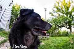 20170509_06551501-Edit.jpg (Les_Stockton) Tags: canine dog pet beggs oklahoma unitedstates us