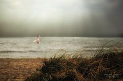 La memoria del mare (swaily ◘ Claudio Parente) Tags: sea mare gabbiano seagull sepia maremma toscana nikond300 swaily claudioparente