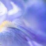 Inner beauty thumbnail