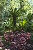 Ancient Forest (All About Light!) Tags: losangelesarboretum nature ancientforest landscape arthur koch