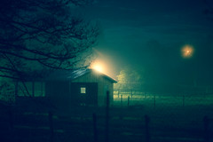 Shelter (Lux Obscura) Tags: shelter horse field moonlight publiclights tree branches silhouette fences grass green moody fog rurality village night notripod reflection
