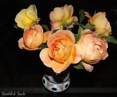 UN PETIT BOUQUET DU JARDIN ! POUR VOUS !!!!!!!!!!!!!! (christabelle12300 (très peu présente)-) Tags: meetinggroup yourbestphotos flowerlover masterphotos worldclassphoto