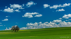 Printemps dans la campagne fribourgoise (Switzerland) (christian.rey) Tags: mannens cultures blé arbres nuages printemps frühling swiss suisse broye fribourg sony alpha 77 1650 campagne agriculture schweiz switzerland fribourgoise landscape paysage spring clouds trees