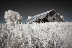 Carroll County Infrared III (Notley) Tags: httpwwwnotleyhawkinscom notleyhawkinsphotography notley notleyhawkins 10thavenue barn farm ir infrared rural carrolltonmissouri carrollcountymissouri 2017 may spring