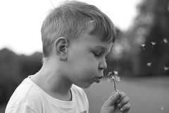 make a wish.... (Wiktor Sobiecki) Tags: dandelion make wish kid boy portrait portret dziecko chłopiec dmuchawiec bw black white sony ilce a6000 6000 prime lens sel50f18 50mm f18 emount photography lovers