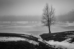 regressing (Christian Collins) Tags: canoneos5dmarkiv bw blackandwhite tree lonetree lone lake ice winter january enero stream fog foggy michigan midmichigan